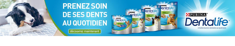 Banner_Dentalife_Petit_Format