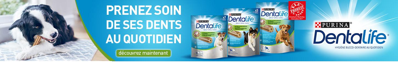 Banner_Dentalife